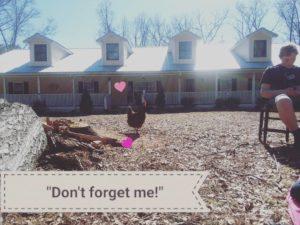 www.linesfromthevine.com- chicken
